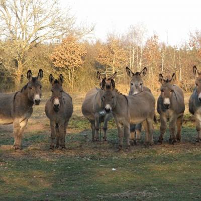 Presentation des ânes