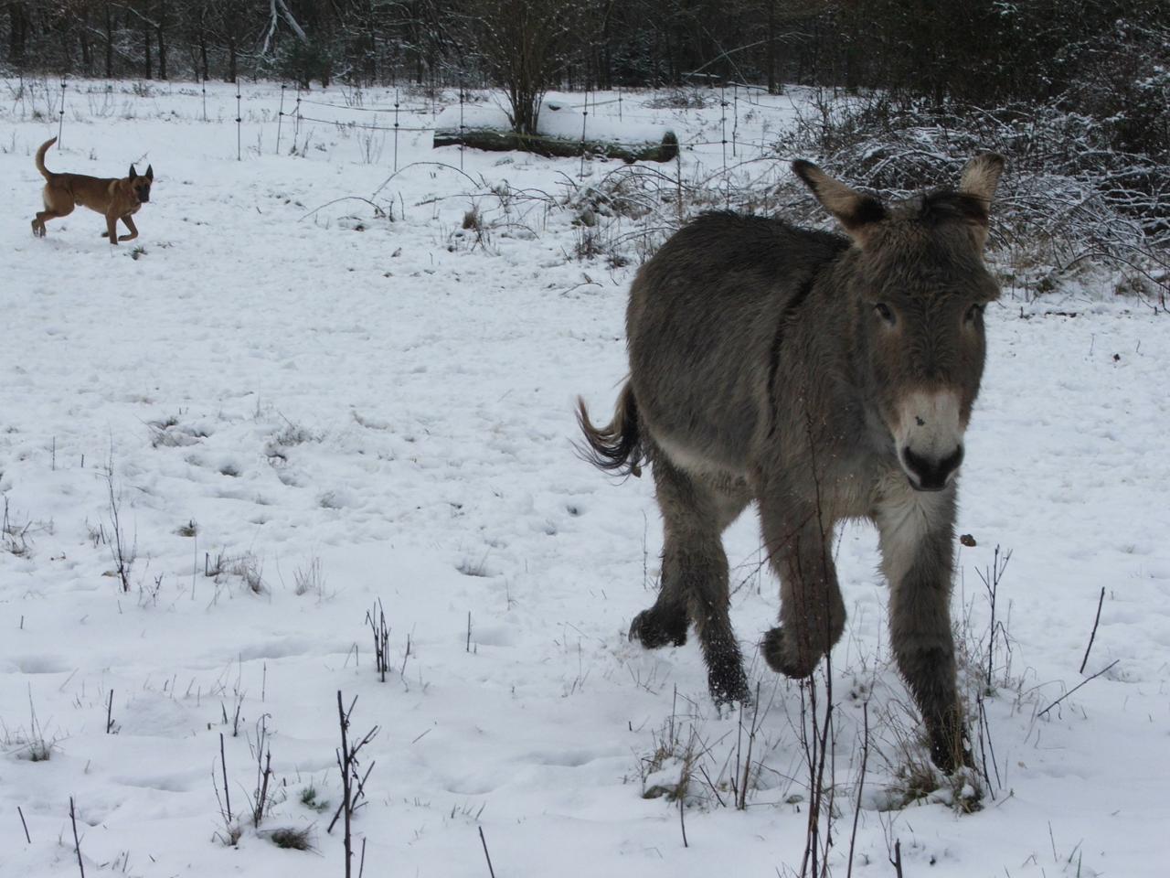Qu'est ce qu'on s'amuse dans la neige, attention au dérapage!